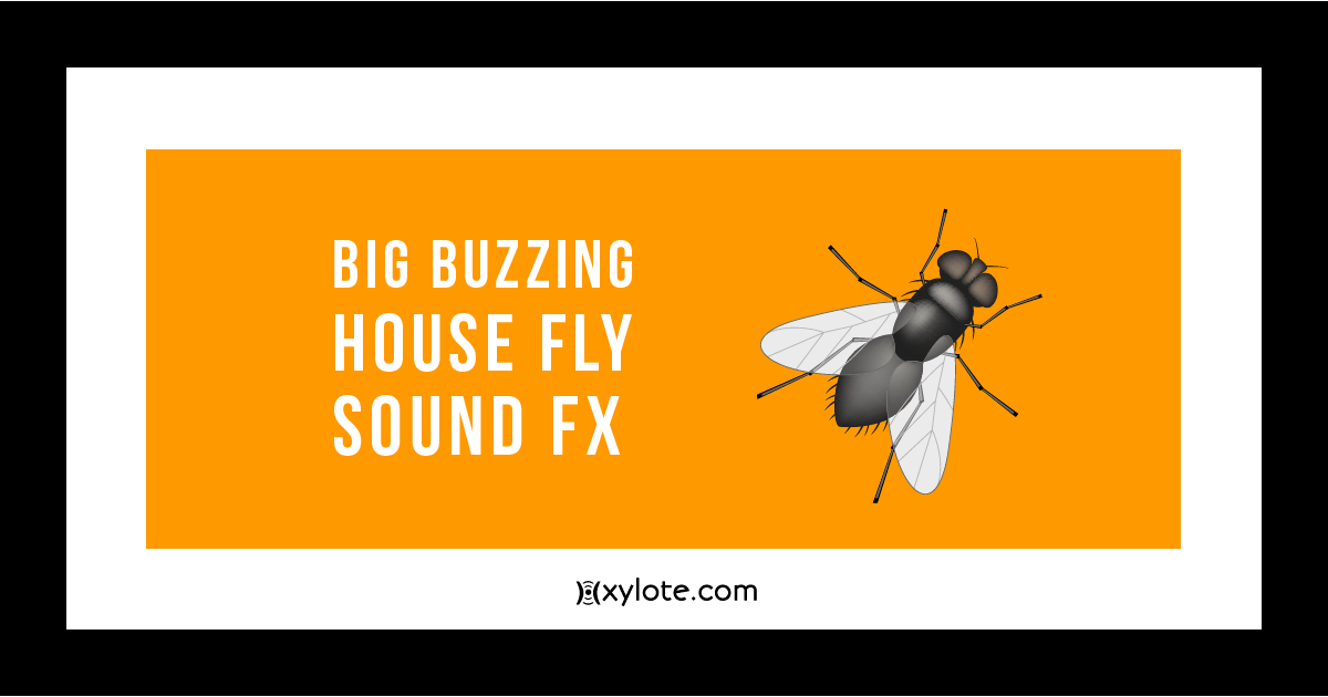 Big Buzzing House Fly Sound Effect
